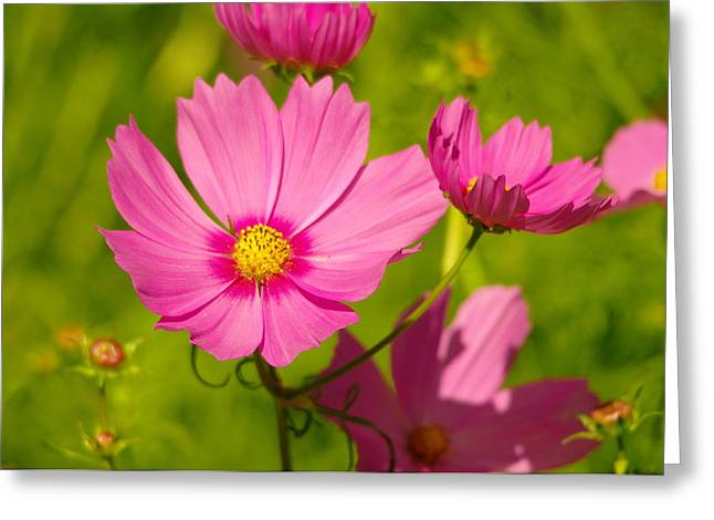 Blooms Greeting Cards - Magical Greeting Card by Jeff  Swan