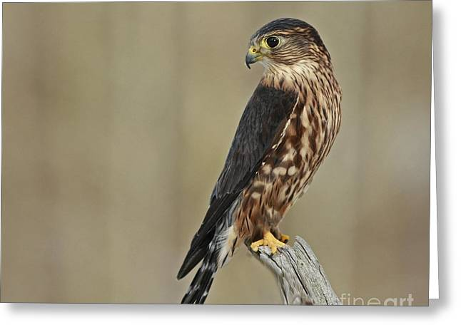Magical Moments With Merlin Greeting Card by Inspired Nature Photography Fine Art Photography