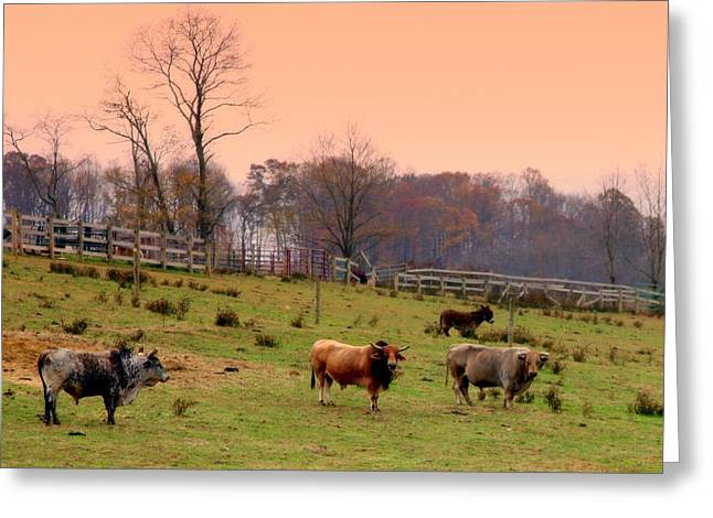 Steer Greeting Cards - Magical Mornings Greeting Card by Karen Wiles