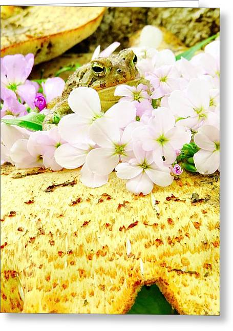 Flying Frog Greeting Cards - Magical Prince Greeting Card by Michelle Milano