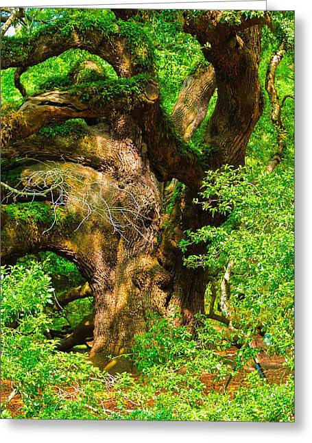 Angel Oak Photographs Greeting Cards - Magnificent Angel Oak Greeting Card by Louis Dallara
