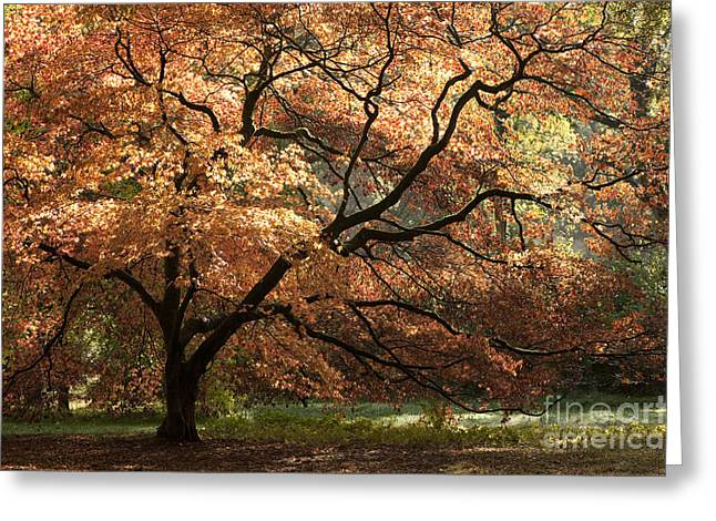 Pretty Scenes Greeting Cards - Magnificent Autumn Greeting Card by Anne Gilbert