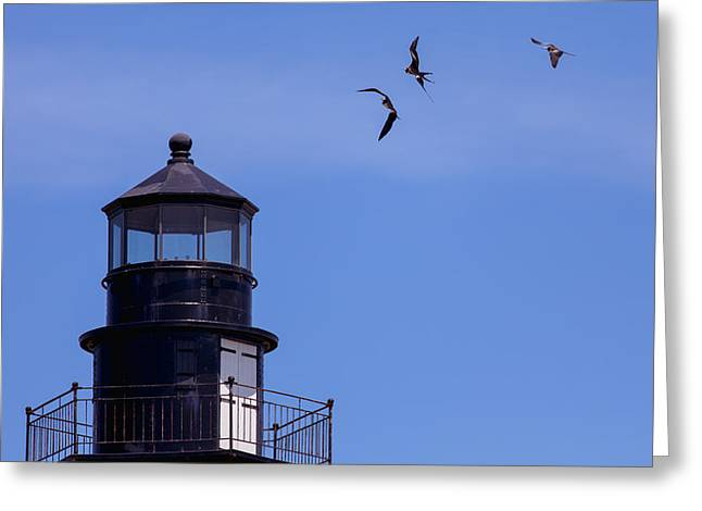 Dry Tortugas Greeting Cards - Magnificent Frigatebirds at Play Greeting Card by John Bailey