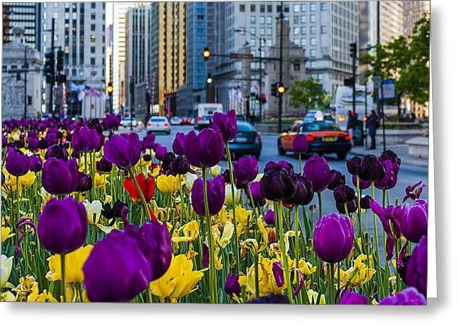 Magnificent Mile Greeting Cards - Magnificent Mile Tulips Greeting Card by Carl Larson