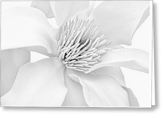 Magnoliaceae Greeting Cards - Magnolia Flower Blossom Monochrome Greeting Card by Jennie Marie Schell