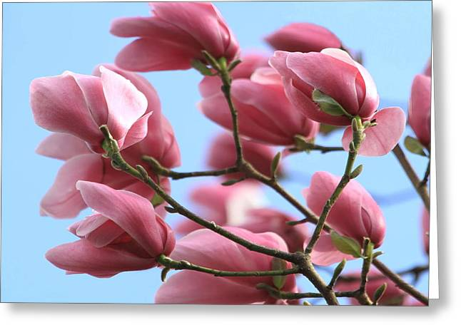 Breezy Photographs Greeting Cards - Magnolia Breeze Greeting Card by Angie Vogel