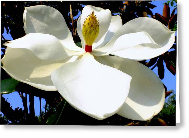 Southern Flowers Greeting Cards - Magnolia Carousel Greeting Card by Karen Wiles