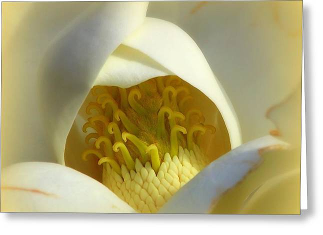 Special Moment Greeting Cards - Magnolia Cloud Greeting Card by Karen Wiles