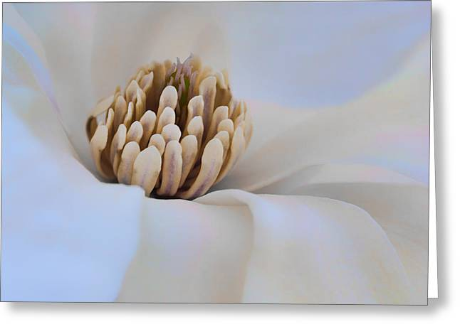 Magnoliaceae Greeting Cards - Magnolia - Floral Abstract Greeting Card by Nikolyn McDonald