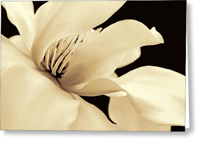 Magnoliaceae Greeting Cards - Magnolia Flower in Sepia One Greeting Card by Jennie Marie Schell