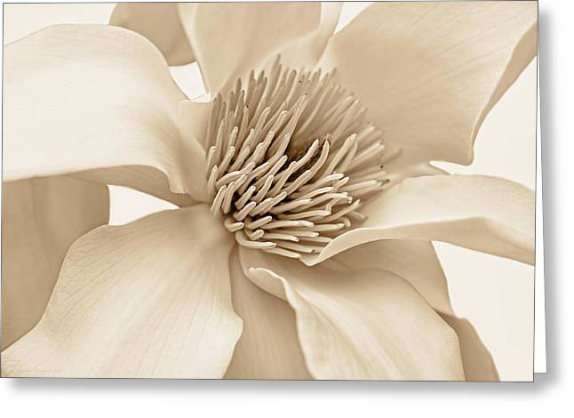 Magnoliaceae Greeting Cards - Magnolia Flower Blossom Soft Brown Greeting Card by Jennie Marie Schell