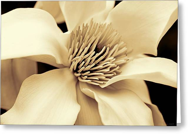 Magnolia Flower In Sepia Four Greeting Card by Jennie Marie Schell