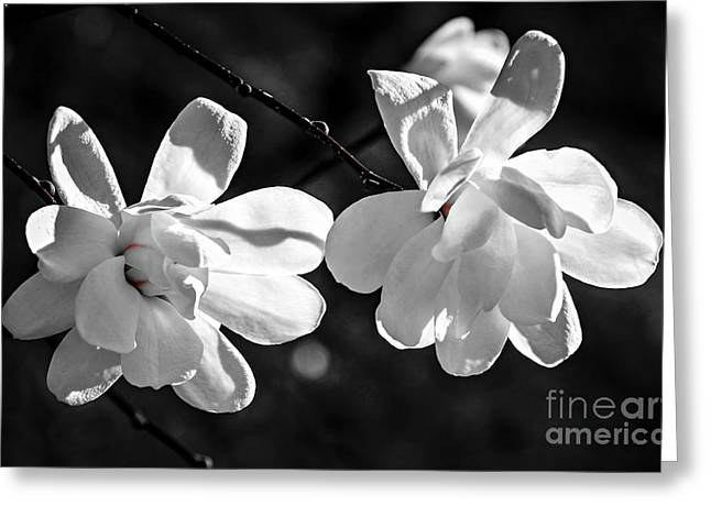 Magnolia Tree Greeting Cards - Magnolia flowers Greeting Card by Elena Elisseeva