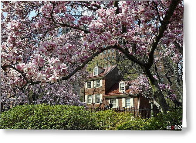 Garden Center Greeting Cards - Magnolia Garden 2013  Greeting Card by Andrew Dinh