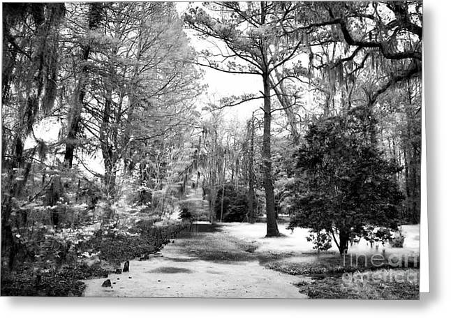 Old Tress Greeting Cards - Magnolia Gardens Greeting Card by John Rizzuto
