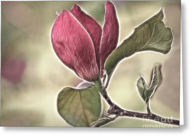 Floral Digital Art Greeting Cards - Magnolia Glow Greeting Card by Susan Candelario