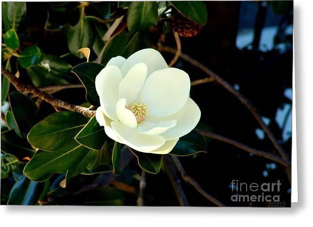 Magnolia Grandiflora Greeting Card by Hanza Turgul