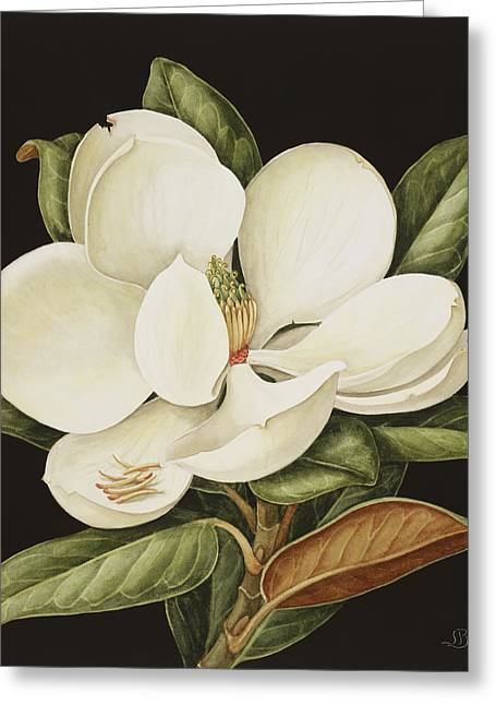 Blooms Greeting Cards - Magnolia Grandiflora Greeting Card by Jenny Barron