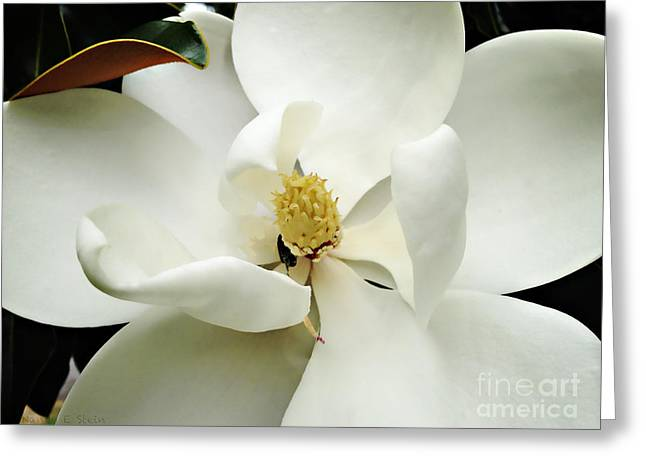 Stein Greeting Cards - Magnolia In Color Greeting Card by Nancy E Stein