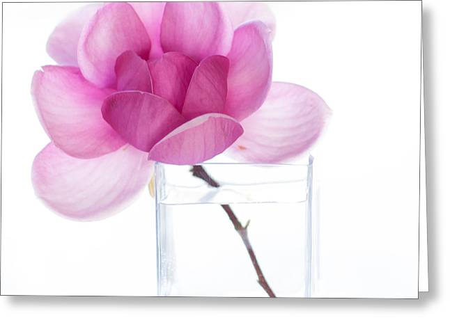 Fine Art Flower Photography Greeting Cards - Magnolia Is Magnificent Misspelt Greeting Card by Constance Fein Harding