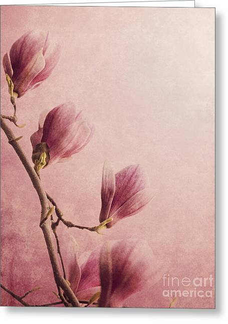 Purple Pyrography Greeting Cards - Magnolia Greeting Card by Jelena Jovanovic