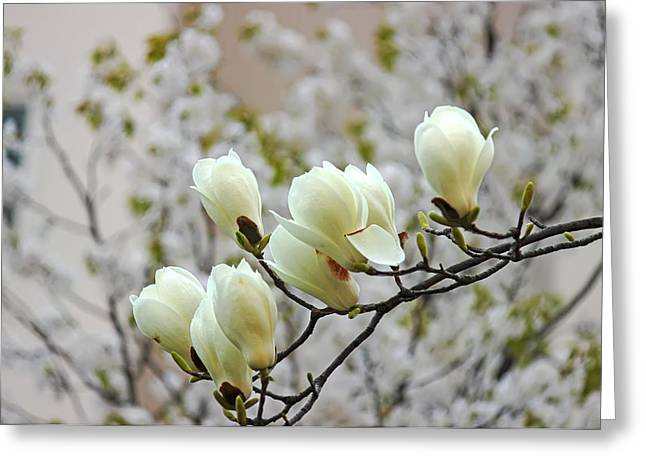 Hdr Landscape Pyrography Greeting Cards - Magnolia Greeting Card by Phoresto Kim