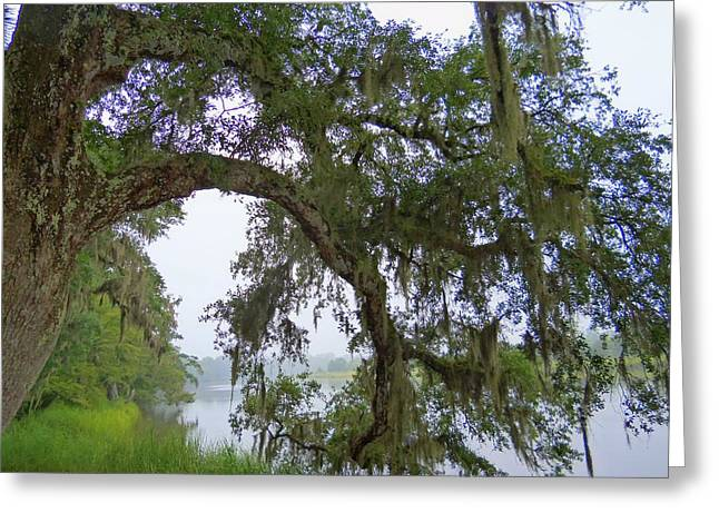 Magnolia Plantation 1 Greeting Card by Ron Kandt