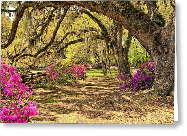 Charleston Pathway Greeting Cards - Magnolia Plantation Path Greeting Card by Marcia Colelli