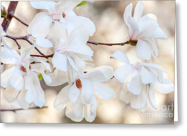 _art Greeting Cards - Magnolia Spring 1 Greeting Card by Susan Cole Kelly Impressions