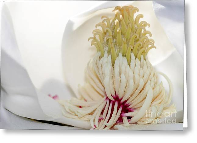 Magnolia Sticky Fingers Greeting Card by Sabrina L Ryan