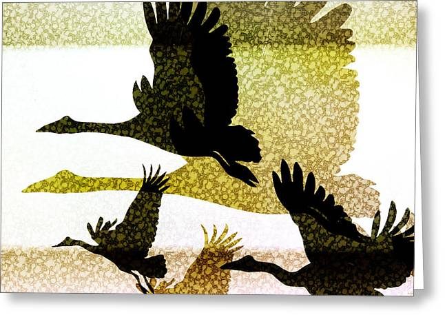 Flying Animal Greeting Cards - Magpie Geese in Flight Greeting Card by Holly Kempe