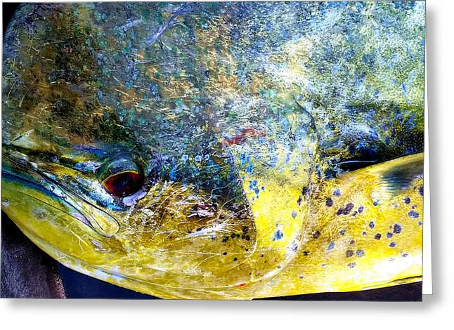 Fishing Tournaments Greeting Cards - Mahi Greeting Card by Karen Rhodes
