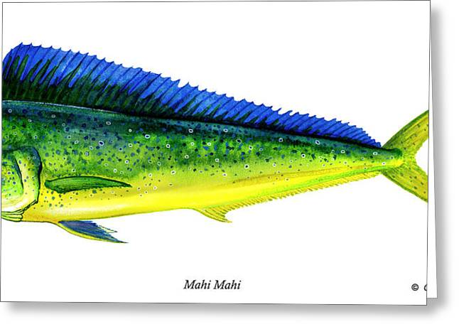 Gamefish Greeting Cards - Mahi Mahi Greeting Card by Charles Harden