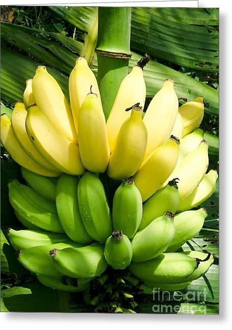 Fruit Tree Art Greeting Cards - Maia maole Banana Makawao Maui Hawaii Greeting Card by Sharon Mau