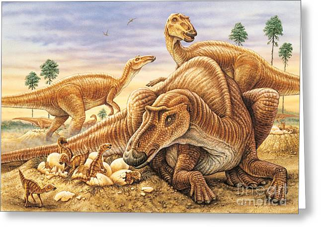 Phil Wilson Greeting Cards - Maiasaura and Nest Greeting Card by Phil Wilson