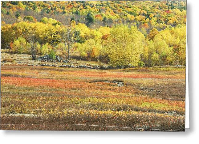 Blueberry Barrens Greeting Cards - Maine Blueberry Field -Fall Folige - Forest Greeting Card by Keith Webber Jr