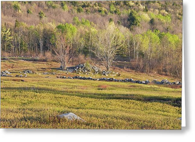 Spring In Maine Photographs Greeting Cards - Maine Blueberry Field In Spring Greeting Card by Keith Webber Jr