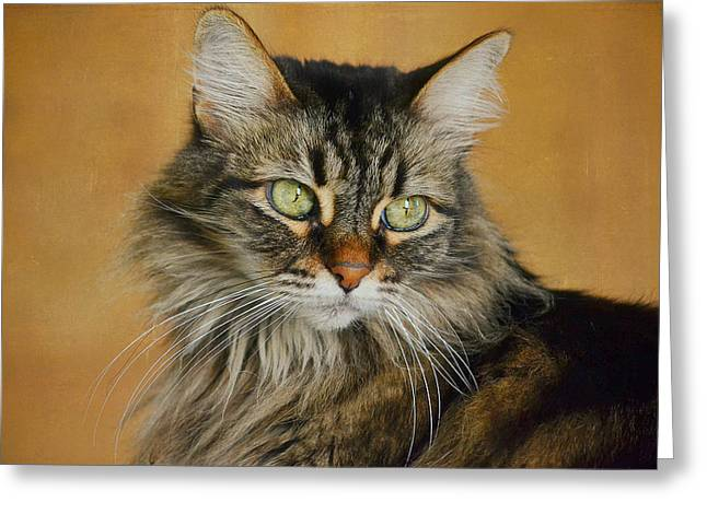 Maine Coon Greeting Cards - Maine Coon In Topaz 2 Greeting Card by Fraida Gutovich