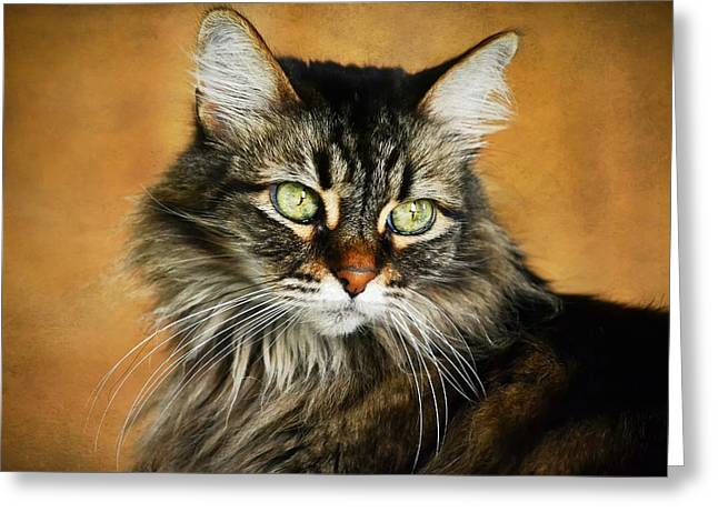 Maine Coon Greeting Cards - Maine Coon In Topaz Greeting Card by Fraida Gutovich