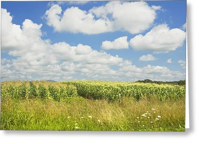Maine Landscape Greeting Cards - Maine Corn Field In Summer Photo Print Greeting Card by Keith Webber Jr