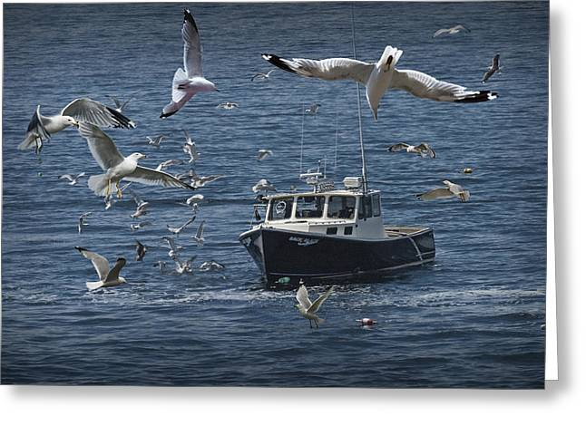 Randy Greeting Cards - Maine Fishing Boat chased by Gulls Greeting Card by Randall Nyhof