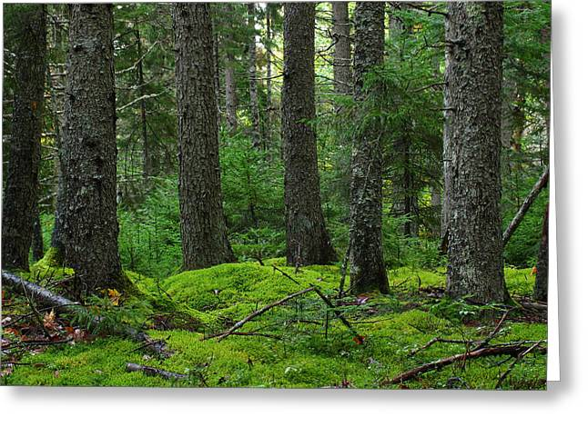 Maine Spring Greeting Cards - Maine Forest Acadia National Park Greeting Card by Juergen Roth