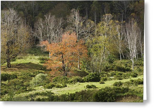 Maine Farms Greeting Cards - Maine Hillside Landscape in Fall Greeting Card by Keith Webber Jr