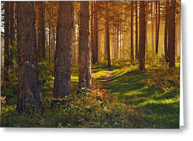 Forest Floor Greeting Cards - Maine Pine Forest Bathed in light Greeting Card by Movie Poster Prints