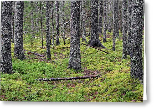 Maine Spring Greeting Cards - Maine Woods of Acadia National Park Greeting Card by Juergen Roth