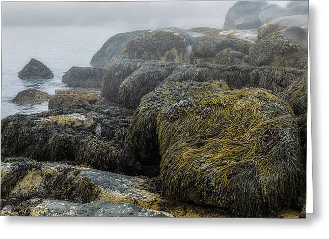 Cape Neddick Greeting Cards - Maines Rocky Coast Greeting Card by Joseph Smith