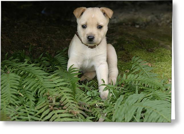 Puppies Photographs Greeting Cards - Maisie the Pup Greeting Card by Belinda Greb