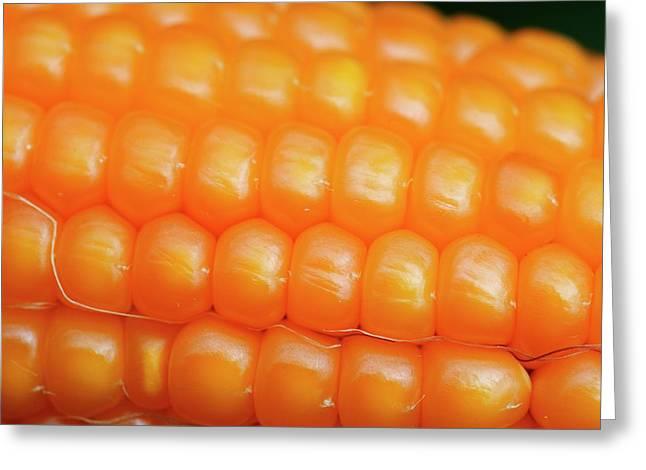 Maize Cob Greeting Card by Mauro Fermariello