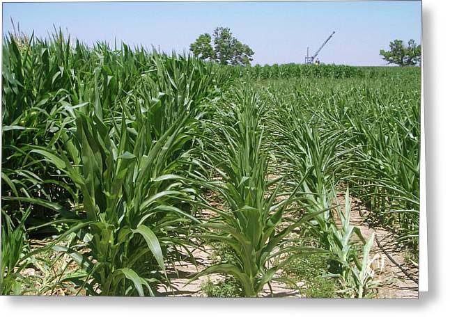 Maize Crop Irrigation Research Greeting Card by Tom Trout/us Department Of Agriculture