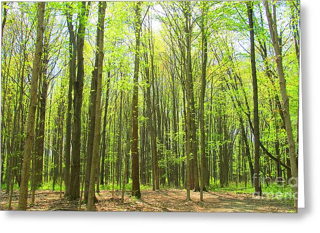 Moral Greeting Cards - Majestic Trees in the Springtime Greeting Card by Tina M Wenger